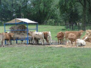 Gospodarstwo agroturystyczne – Stary Młyn