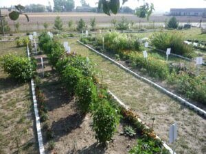 Ogród ziołowy HYZOP