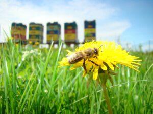 Zagroda Edukacyjna Warmińska Pszczoła